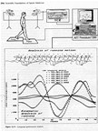 "Biomechanics is an integration of the two disciplines of biology (""bio"") and physics (""mechanics"")."